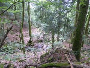 Frankreich 2015 Forstweg