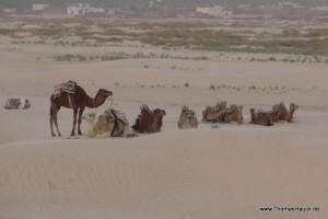 Tunesien_139