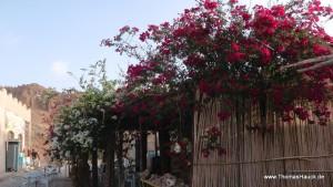 Tunesien_187