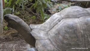 Seychellen Schnappschuss Schildkröte