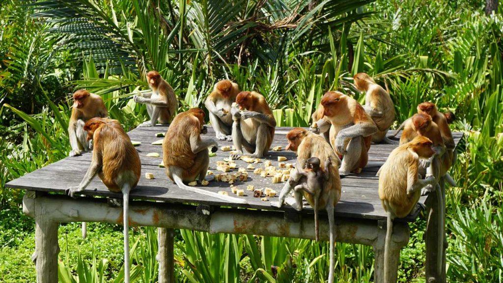 Proboscis Sanctuary