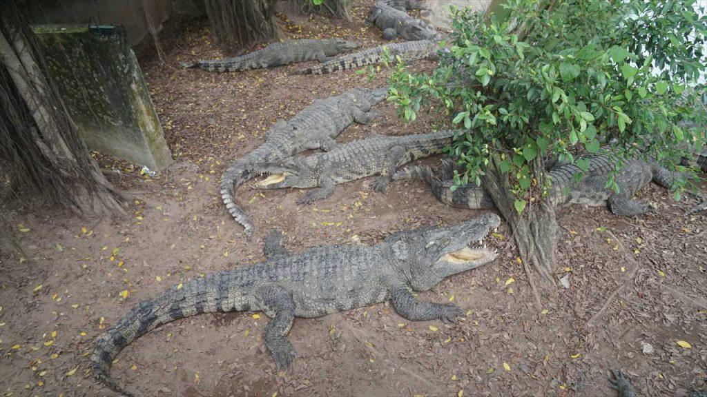 Krokodilfarm