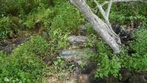 Geocaching auf Galapagos