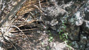 Geocaching auf Galapagos Cacheversteck Charles Darwin