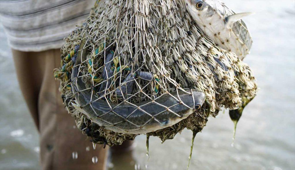 Mangroven - Fischfang
