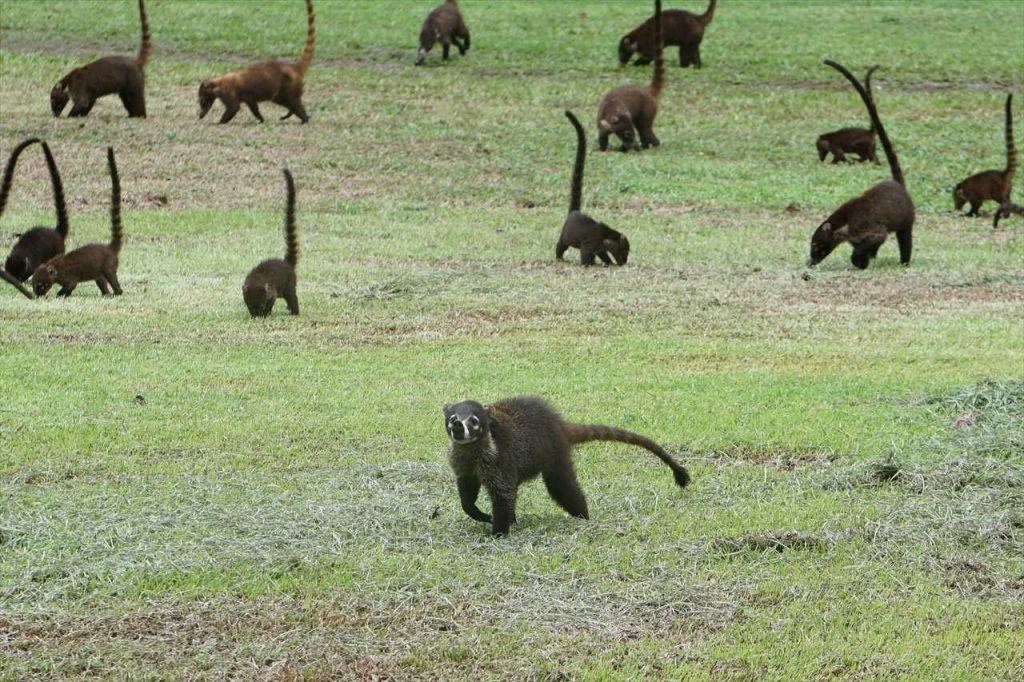 Corcovado Nationalpark