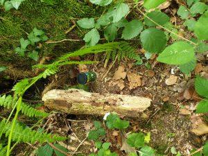 Waldrunde