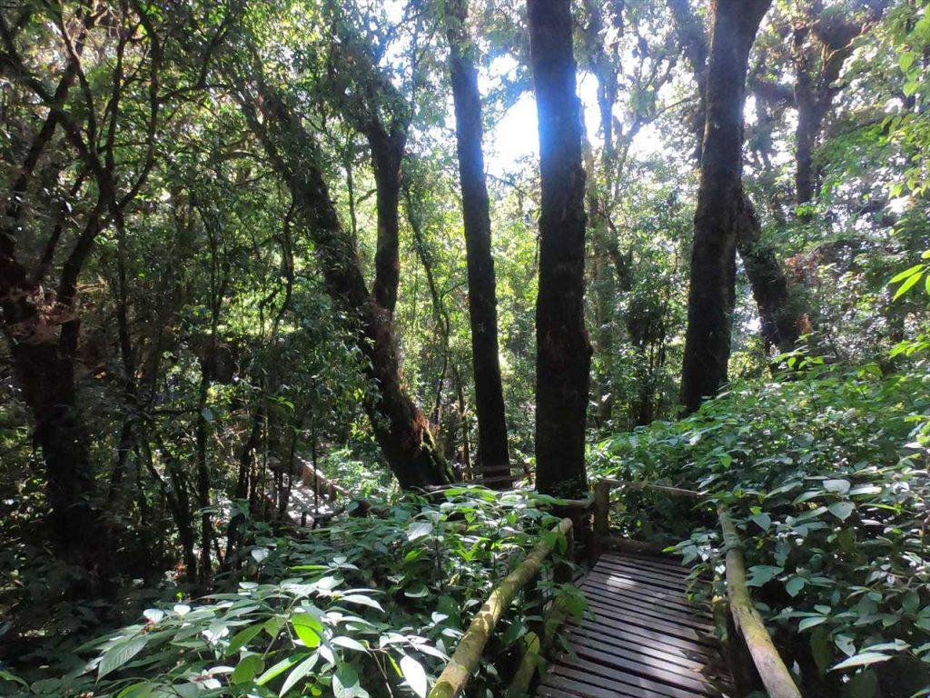 Inthanon Nationalpark