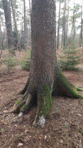 Im Innern des Waldes