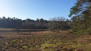 Coesfelder Heide
